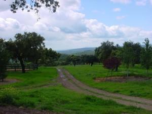 16Encinosas Campo (3)